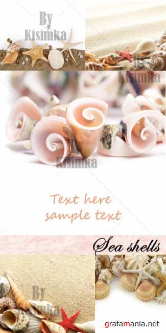 Stock Photo: Sea shells