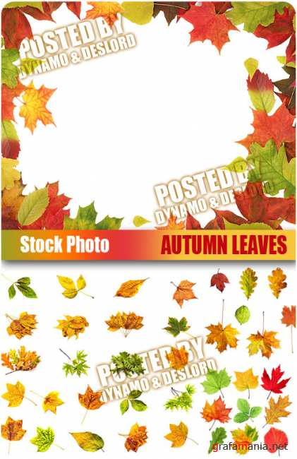 UHQ Stock Photo - Autumn Leaves