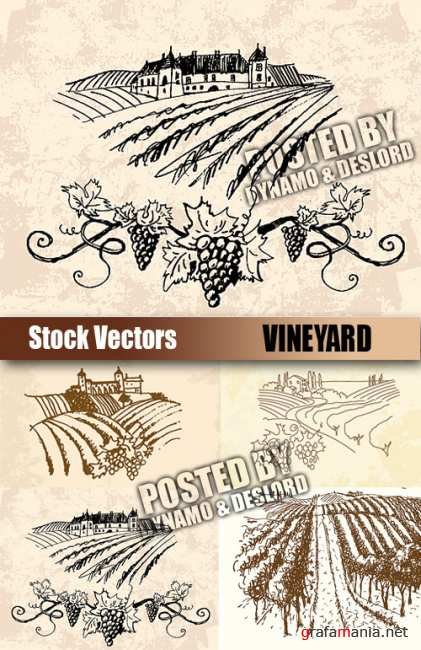 Stock Vectors - Vineyard
