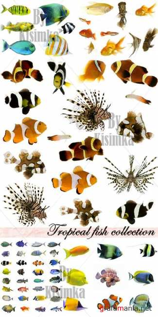 Stock Photo: Tropical fish collection