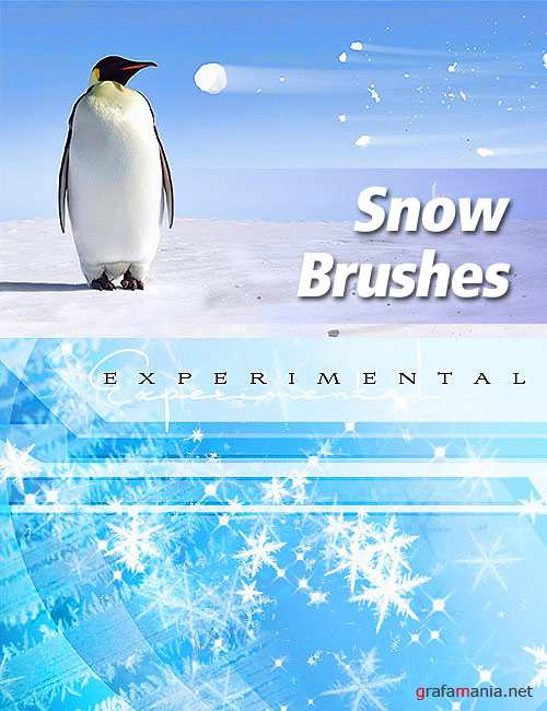Winter snow & ice brushes