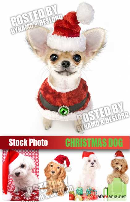 UHQ Stock Photo - Christmas Dog