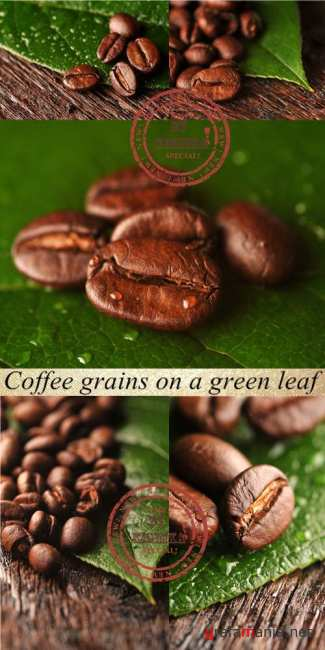 Stock Photo: Coffee grains on a green leaf