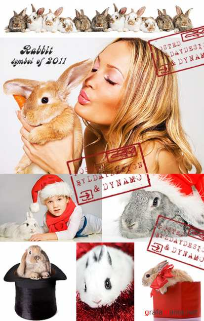 Stock Photo - Rabbit is the symbol of year 2011