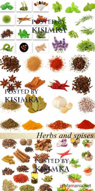 Stock Photo: Herbs and spises
