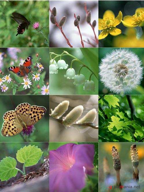 Leaves, Flowers, Insects - Stock Photo