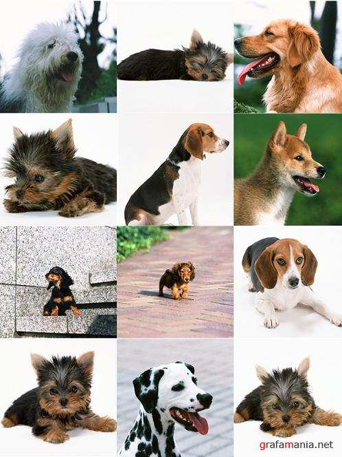 Stock Photo - Dogs №2