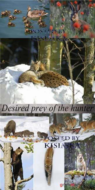 Stock Photo: Desired prey of the hunter