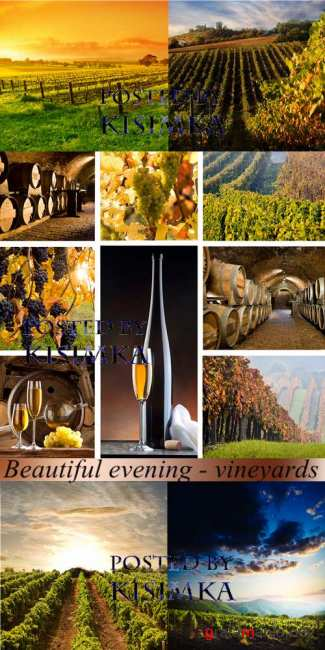 Stock Photo: Beautiful evening - vineyards
