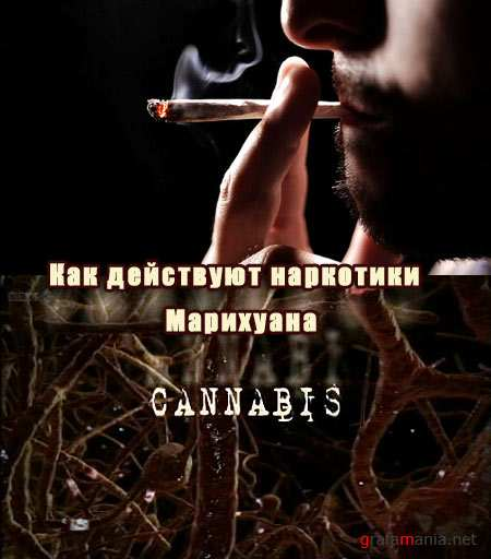��� ��������� ���������. ��������� / How Drugs Work. Cannabis (2011) TVRip