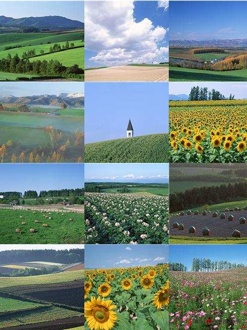 Stock Photo - Fields
