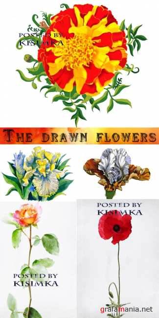������������ �����  Stock Photo: The drawn flowers