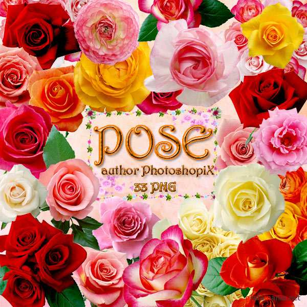 PNG ������� ��� Photoshop � ���� / Rose