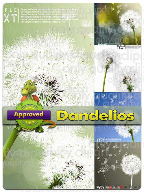 Dandelions - Vector Stock