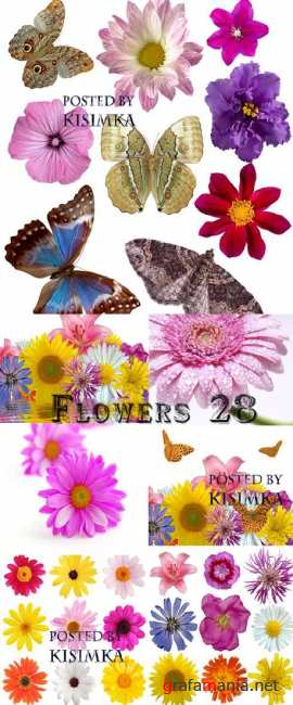 Цветы 28  Stock Photo: Flowers 28