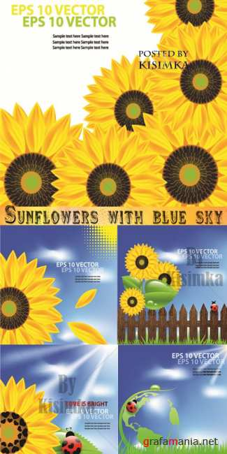 ��������� � ����  Stock: Sunflowers with blue sky