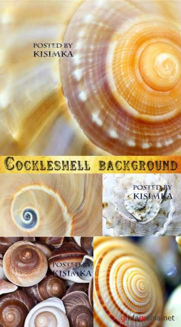 ���������� ���  Stock Photo: Cockleshell background