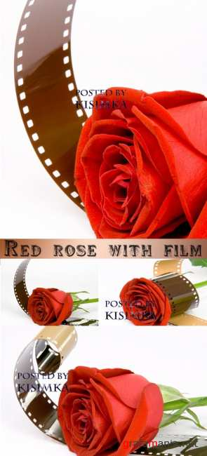 ������� ���� � ������  Stock Photo: Red rose with film