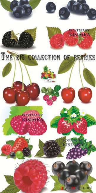 ����� � �������  Stock: The big collection of berries in a vector