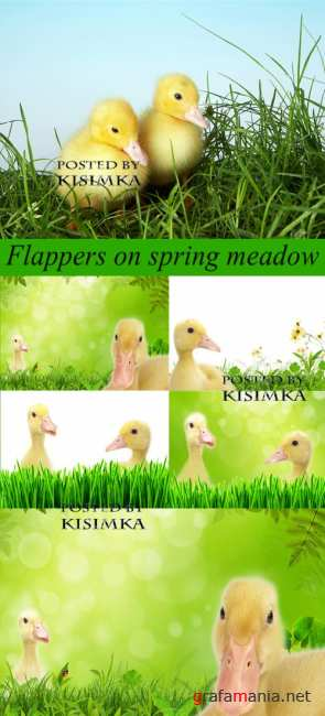 Stock Photo: Flappers on spring meadow