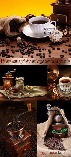 Stock Photo: Vintage coffee grinder and coffe plant with granules