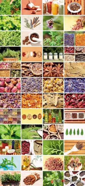 Clipart - Herbs & Spices