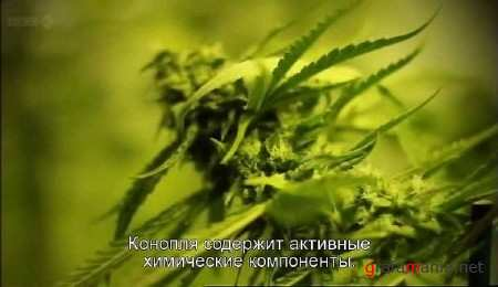 � ��� ���� ��������� / CannabisWhat's the Harm (2011) TVRip