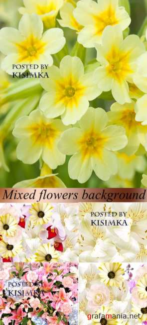 Stock Photo: Mixed flowers background