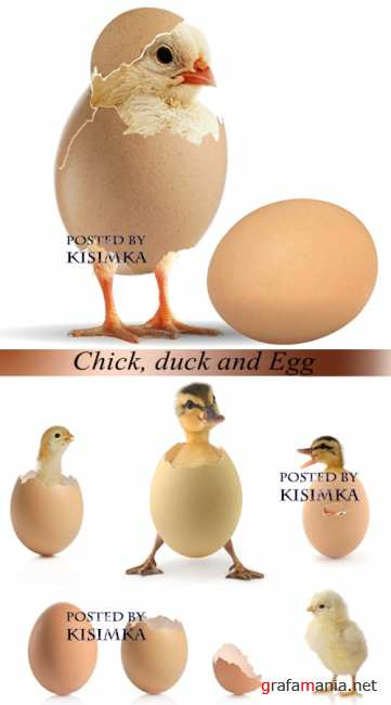 Stock Photo: Chick, duck and Egg
