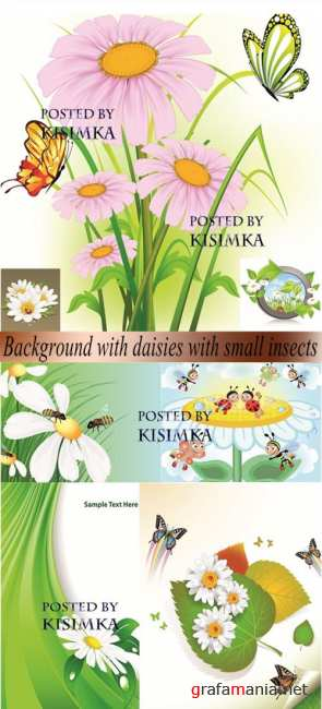 Stock: Background with daisies with small insects