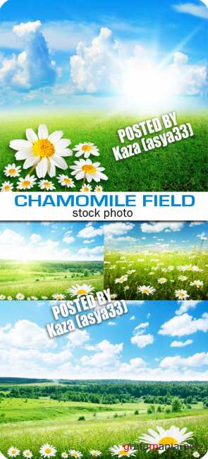 Chamomile fields 3
