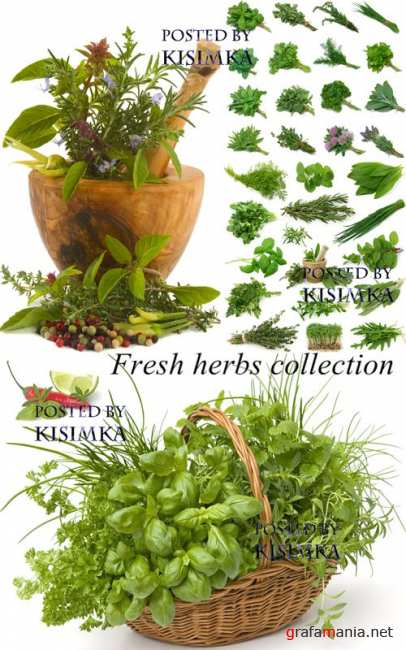 Stock Photo: Fresh herbs collection