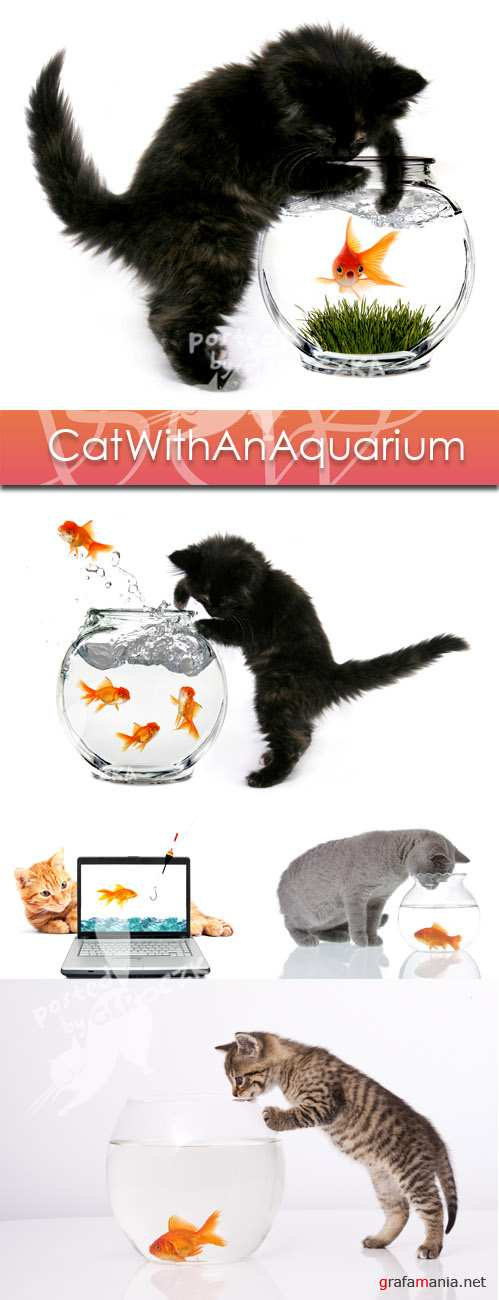 Cat with an aquarium