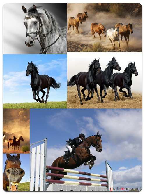 Horses Set - Stock Photo