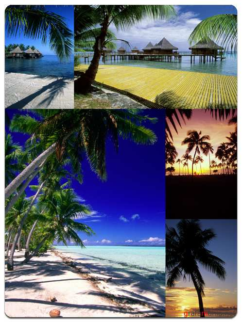 Palm Trees and Sea - Stock Images