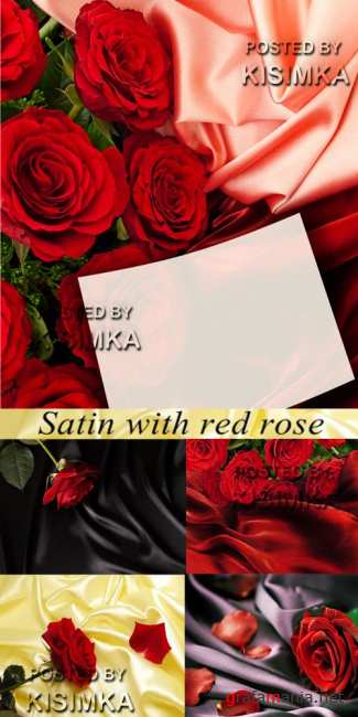 Stock Photo: Satin with red rose