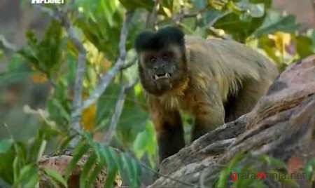 Animal Planet: ������� ��������. �������� / Mutant Planet. Brazil`s Cerrado (2010) SATRip