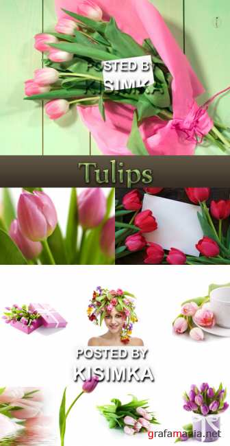 Stock Photo: Variety of tulips