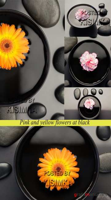 Stock Photo: Pink and yellow flowers at black