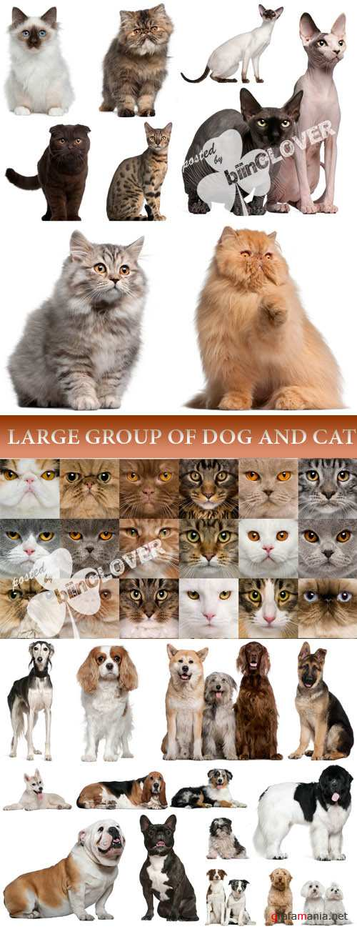 Large group of dog and cat