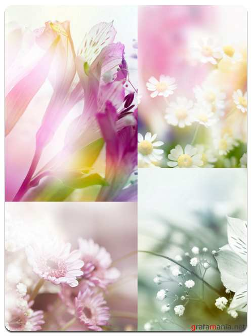 Beautiful Flowers - HQ Stock Photo Images