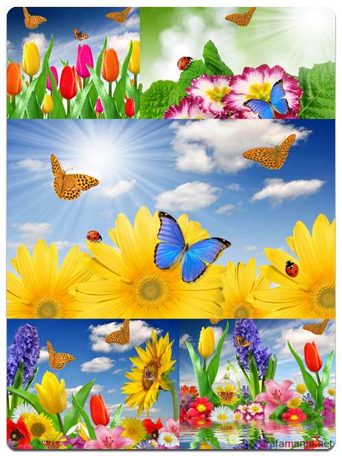 Flowers and Butterflies - Stock Photo Images