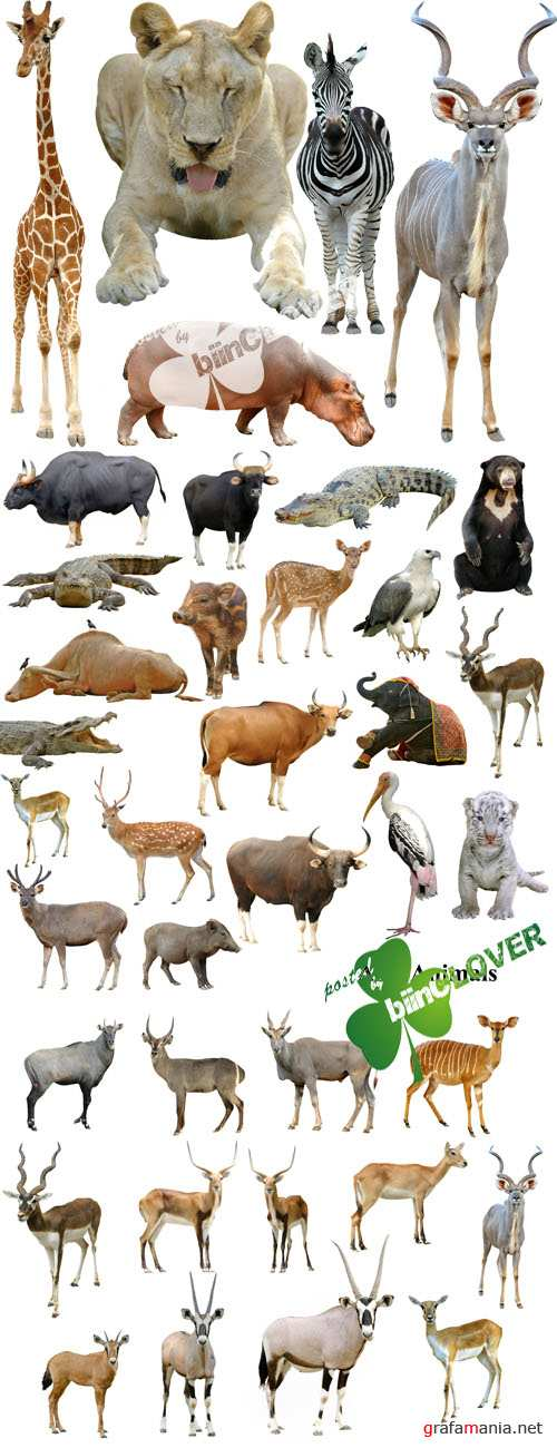 Animals, collection
