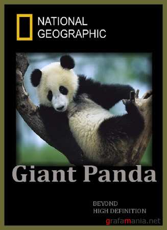 Гигантская панда. Панды на свободе / Giant Panda. Pandas in the Wild (2009) HDTVRip