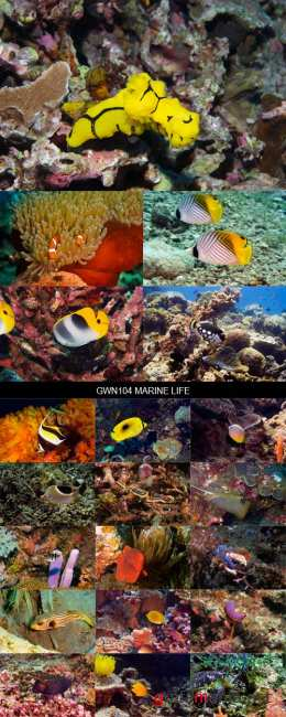 Stock Images - GWN104 Marine Life