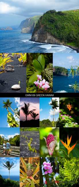Stock Images - GWN109 Green Hawaii