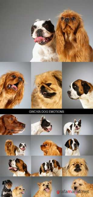Stock Images - GWC105 Dog Emotions