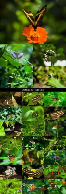 Stock Images - GWN105 Butterflies