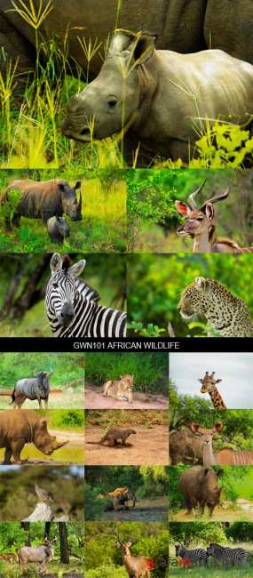 Stock Images - GWN101 African Wildlife