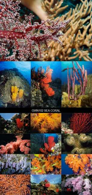 Stock Images - GWN102 Sea Coral